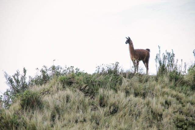 Cusco-93
